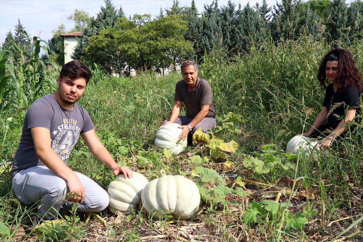 Üniversitede sebze meyve yetiştiriyorlar