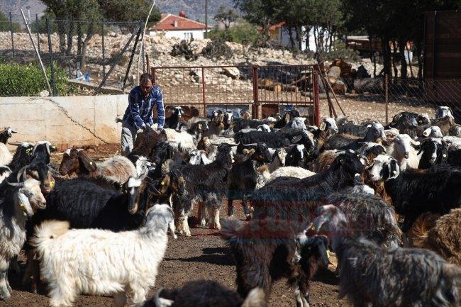 Keçilerin çobanı, mahallelinin öğretmeni oldu